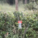 Lantern charging in the bushes